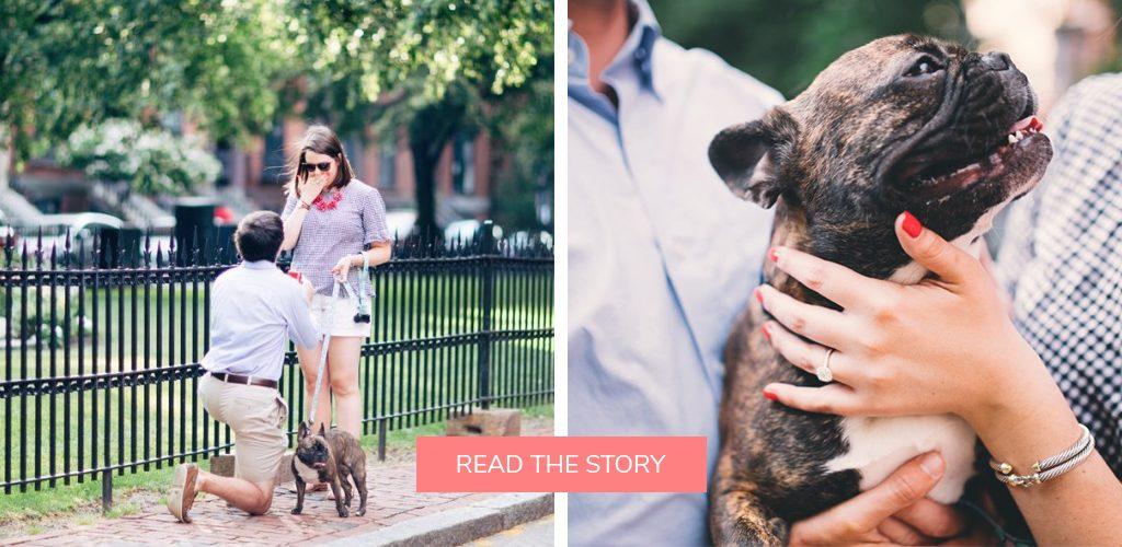 pet dog proposals engagement ring sidewalk