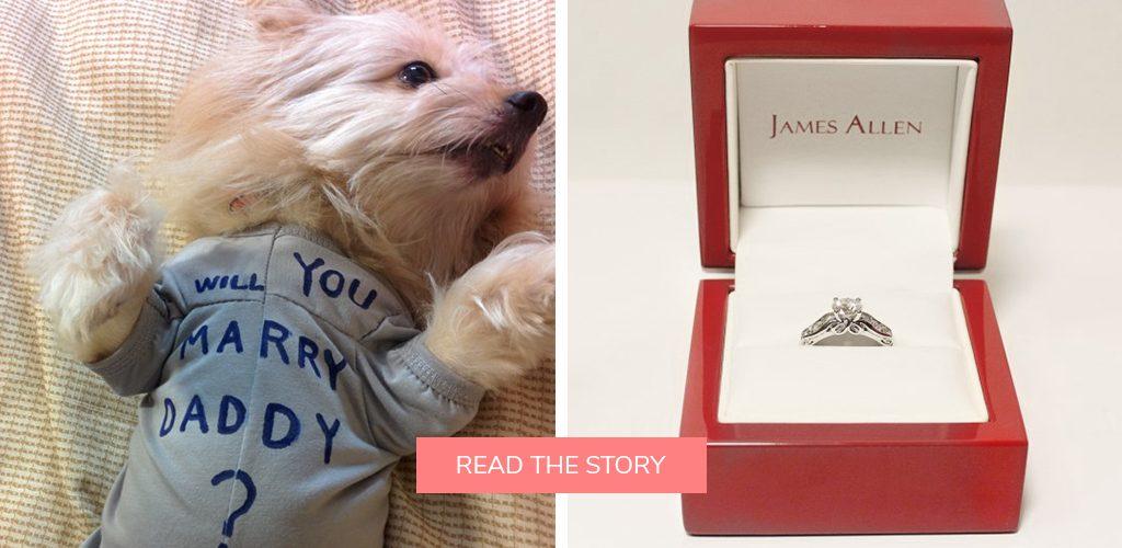 pet dog proposals t shirt engagement ring