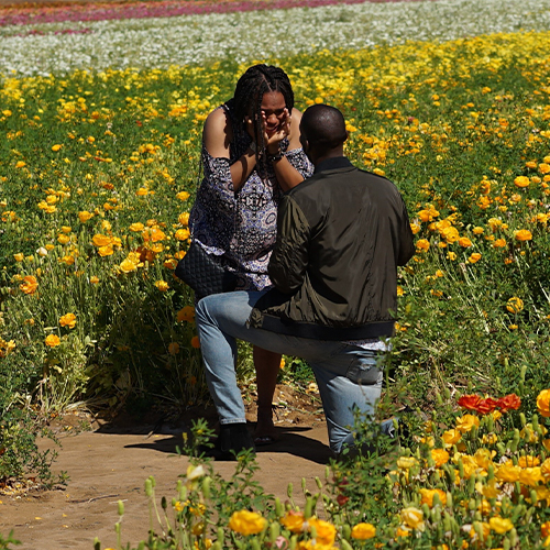 field of flowers proposal